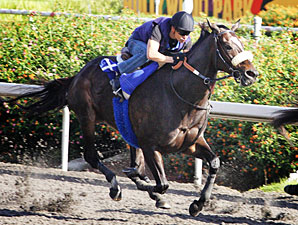 Zenyatta works at Hollywood Park on October 30, 2010.