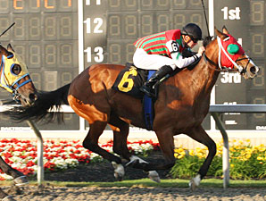 Zoeling wins the 2010 Leematt Stakes.