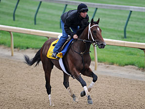 Alpha - Churchill Downs May 1, 2012.