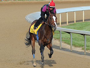 Bodemeister on the track at Churchill Downs 4/24/2012.