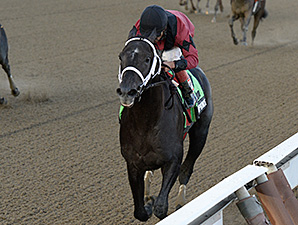 Cairo Prince wins the Nashua Stakes.