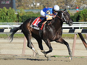 Calibrachoa in the Bold Ruler Stakes.