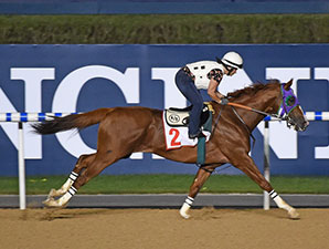 California Chrome on the track at Meydan March 24.