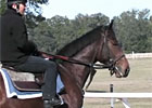 Lentenor at Stephens Thoroughbreds