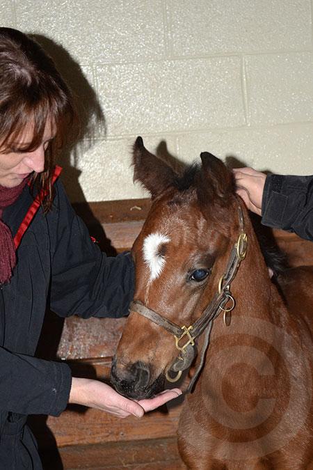 Life Is Sweet Foal