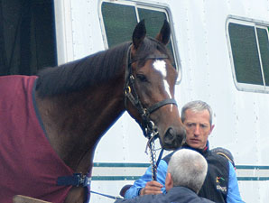 Master of Hounds arrives at Churchill Downs for the 2011 Kentucky Derby.
