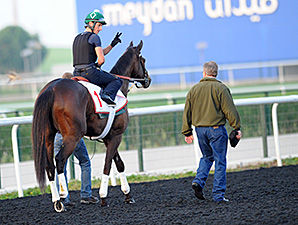 Royal Delta - Dubai, March 27, 2013.