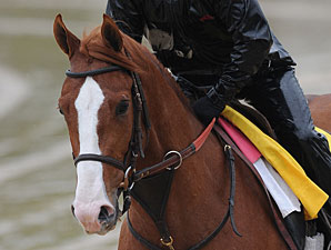 Shackleford at Churchill Downs 5/3/2011.
