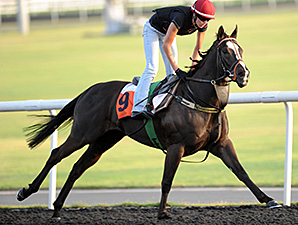 Sole Power - Dubai, March 27, 2013.