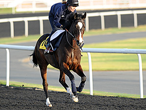 Wigmore Hall - Dubai, March 27, 2013