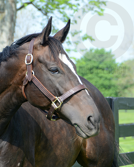 Zenyatta at lanes End Farm in Spring