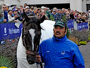 Zenyatta is in the paddock at the 2010 Breeders' Cup.