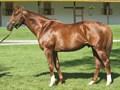 Horse Greeley